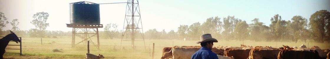 CattleStation3